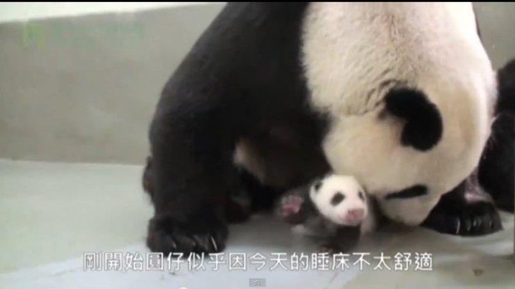 Panda Reunion