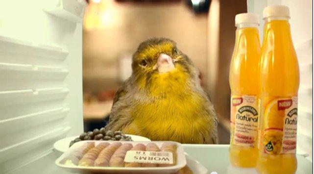 Bird_House