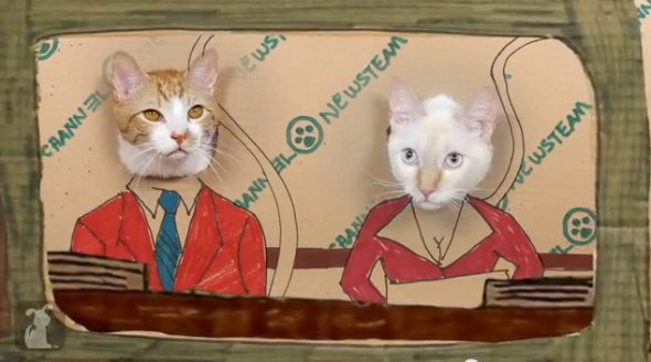 Anchorman_Cats