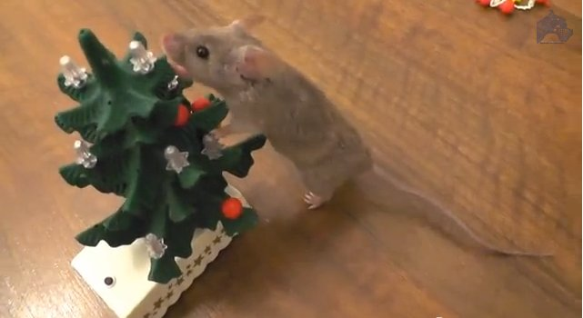 Mouse_decorates_Christmas_Tree