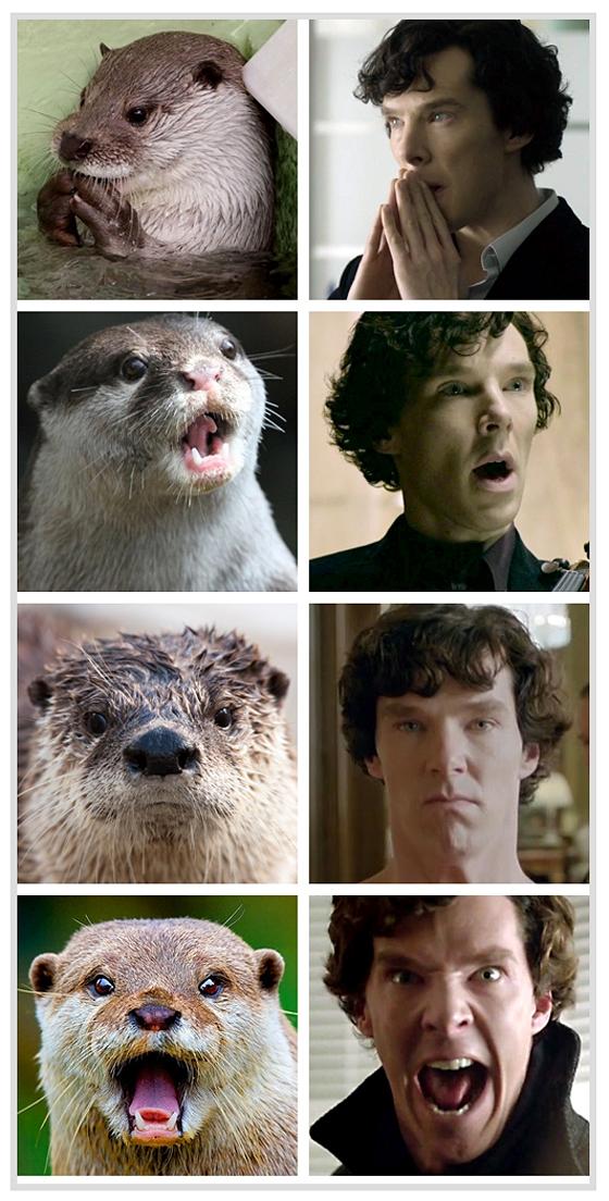 Otters_Cumberbatch
