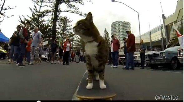 skateboard_cat