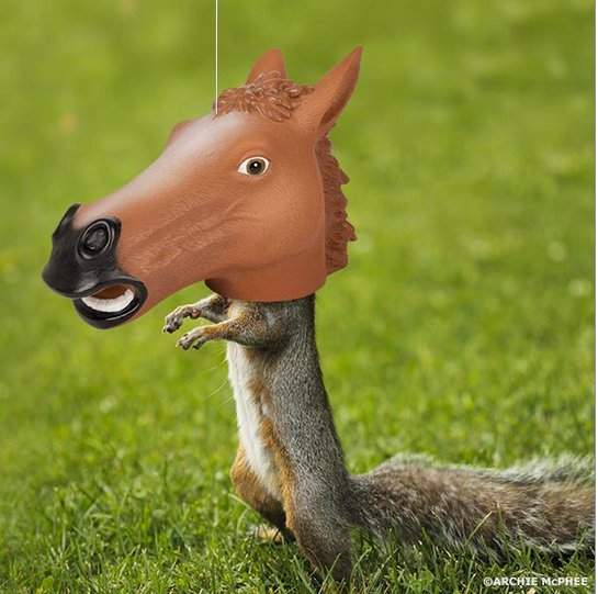 Squirrel_horse2