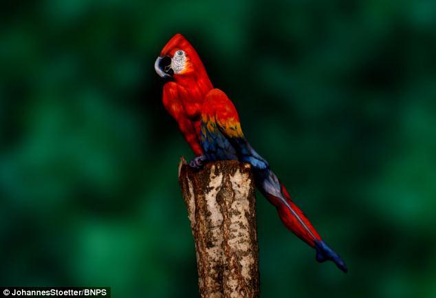 No_A_Parrot