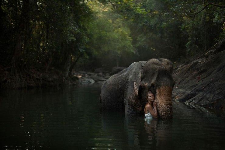 katerina-plotnikova-elephant