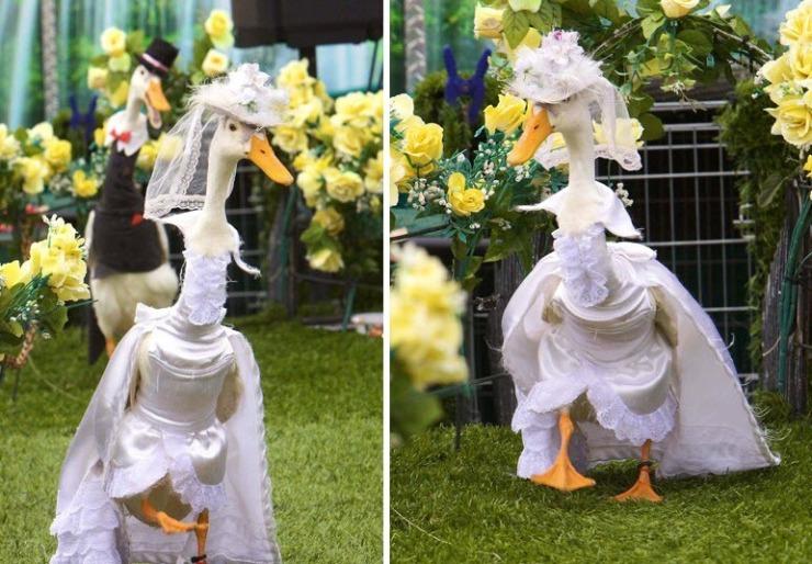 ducks5