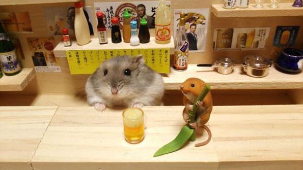 hamster6