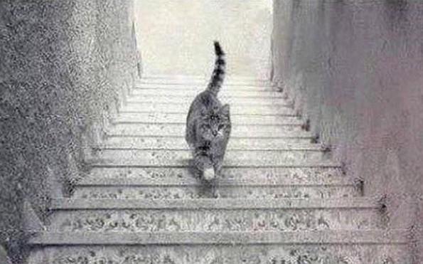 cat_stairs