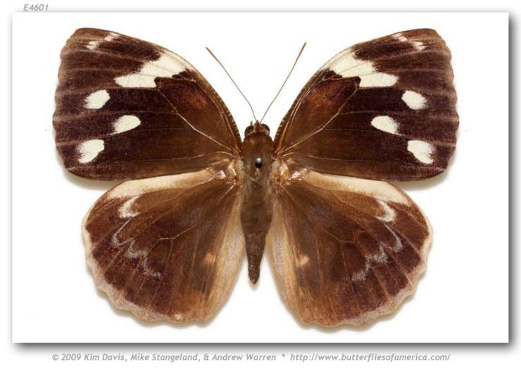 Butterfly_not_snake