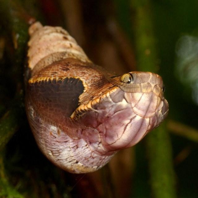 snake_butterfly