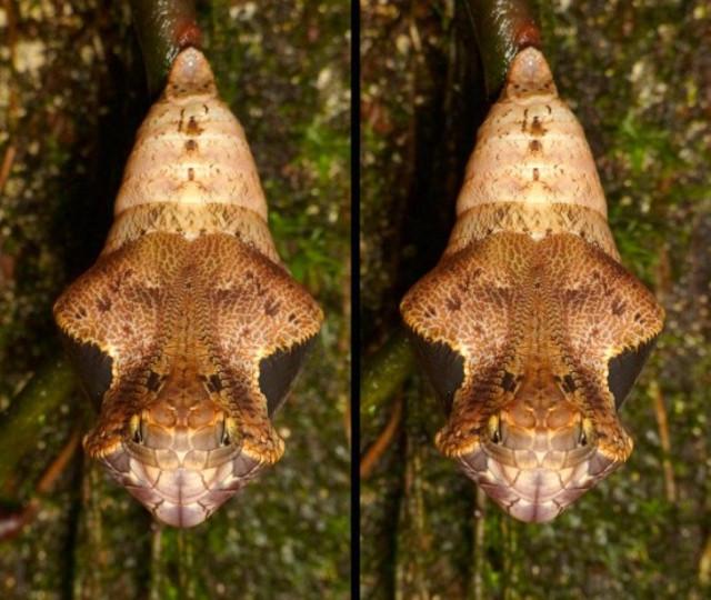 snake_butterfly_3