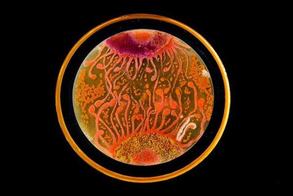 bacteria-art-2