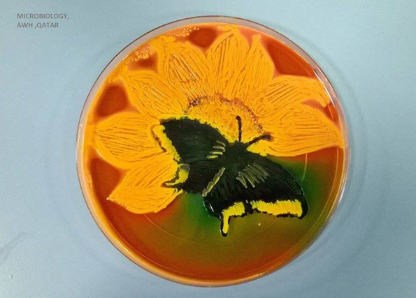 bacteria-art-3